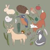 Woodland animals Stock Photos