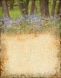 Woodland Background Stock Photos