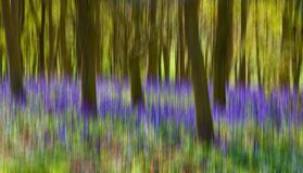 Woodland Background Royalty Free Stock Photos