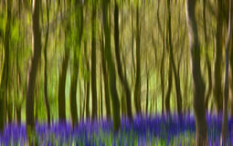 Woodland Background Stock Photos