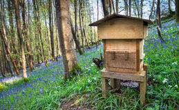 Woodland Beehive Royalty Free Stock Photo