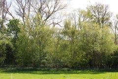 Woodland beyond paddocks Royalty Free Stock Images