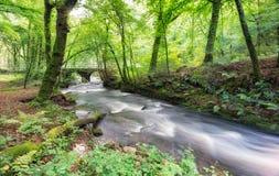 Woodland on Bodmin Moor Stock Image