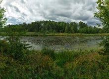 Woodland bog. Clouds sky. Green landscape stock images
