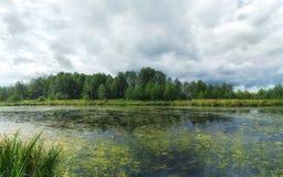 Woodland bog. Forest blue river. Clouds sky stock image