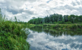 Woodland bog. Clouds sky. Mirror effect royalty free stock images