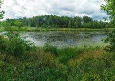 Woodland bog. Forest green river. Clouds sky. Summertime stock image