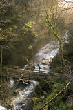 Woodland bridge over the Lyn, Devon, England Royalty Free Stock Photo