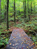Woodland Bridge. A small walking bridge in a Northern Boreal forest in Ontario during the start of the fall season Royalty Free Stock Photos