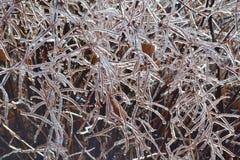 Woodland Bush Encased Ice Stock Photos