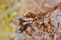 Woodland Bush Encased Ice Royalty Free Stock Images