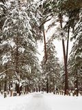 Woodland Cemetery in Stockholm in winter Stock Image