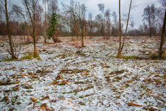 Woodland with a covering of snow Stock Image
