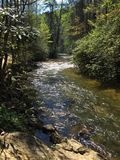 Woodland creek. A creek in the forest Stock Image