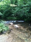 Woodland Creek. A creek in the forest Royalty Free Stock Photos