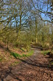 Woodland in Crossgates Royalty Free Stock Photography