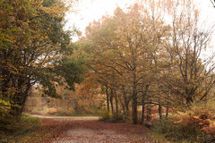 Woodland crossroads in mist & autumn color Stock Image
