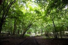 Woodland track royalty free stock images