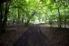 Woodland track royalty free stock photo