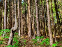 Woodland, Ecosystem, Forest, Tree stock photos