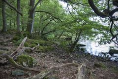 Woodland at Ullswater Stock Photo