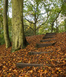 Woodland in fall. Woodland scene in autumn or fall Stock Photo