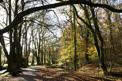 Woodland footpath Stock Image
