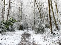 Woodland footpath in winter snow, Chorleywood Common, Hertfordshire stock photos
