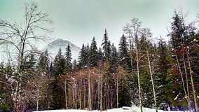 Woodland Forest. A clearing after a snow storm royalty free stock photography