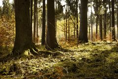Woodland, Forest, Ecosystem, Tree royalty free stock image