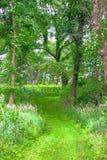 Woodland Forest Path Illinois Stock Photo