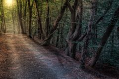 Woodland, Forest, Path, Nature Royalty Free Stock Image