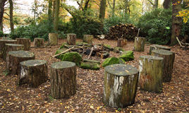 Woodland forest tree trunks seating. Woodland forest seating area and old tree trunk with Autumn leaves royalty free stock image