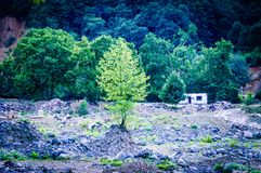 Woodland And Forest Of Turkish Countryside Royalty Free Stock Photos