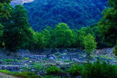 Woodland And Forest Of Turkish Countryside Royalty Free Stock Image