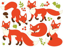 Woodland Foxes Set Stock Photography