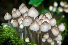 Woodland fungi Stock Photo