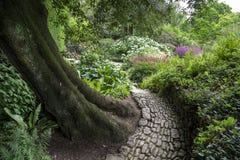 Woodland garden, England Royalty Free Stock Images