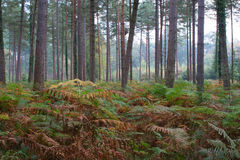 Woodland glade 2. Woodland glade including forest floor vegitation Royalty Free Stock Photo