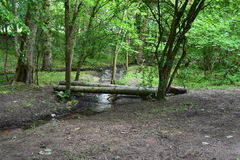 Woodland. Green trees and stream in the UK Royalty Free Stock Photo