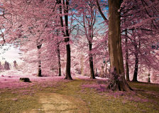 Infrared image of woodland grove with pink trees. An Infrared image of a woodland grove with pink trees, blue skies and light shining through the leaves royalty free stock images