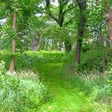 Woodland Hiking Trail Illinois Royalty Free Stock Photography