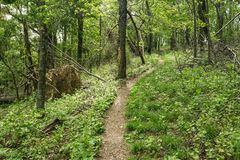 Woodland Hiking Trail in the Mountains. Woodland hiking trail located in the Blue Ridge Mountains of Virginia, USA royalty free stock photo