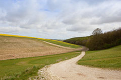 Woodland and hillside oilseed rape crops Stock Images