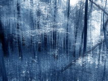 Woodland Illusion. Dreamy blue abstract of wooded area Stock Photography