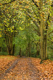 Woodland In Fall Royalty Free Stock Image