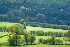 Woodland landscape Royalty Free Stock Photo