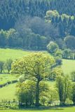 Woodland landscape Royalty Free Stock Images