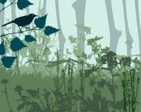 Woodland Landscape Stock Photography