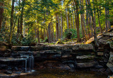 Woodland landscape in Swallow Falls State Park, Maryland. A view of low water at Tolliver Falls in the middle of a woodland forest landscape, located in Swallow Stock Photography
